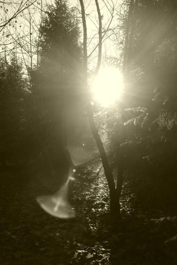 Woodland Photography Rebecca Deegan Dark